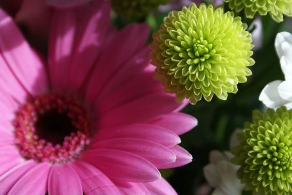 Flower Arrangement by alexshairp