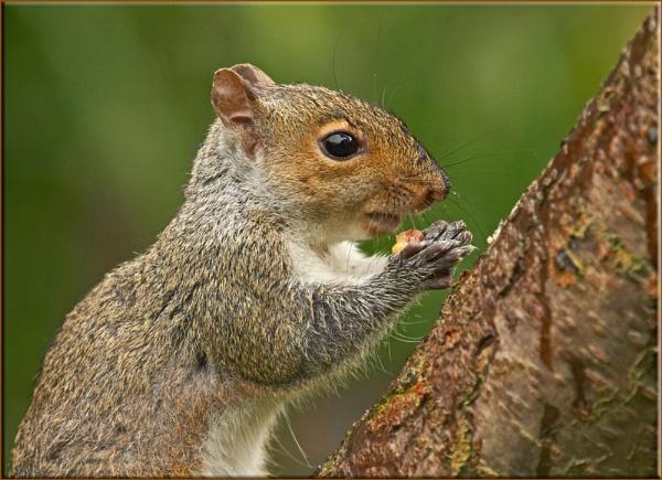 Squidge by daffydill56