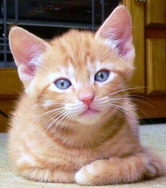 fourth kitten by Vern