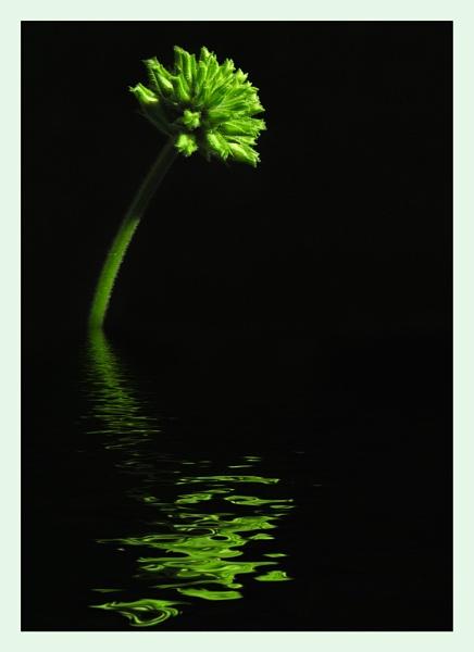 Green Ripples by Boagman65