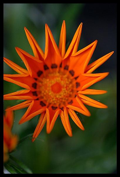 flower by raygregson