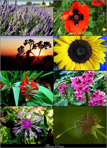 Flower Power by WimdeVos