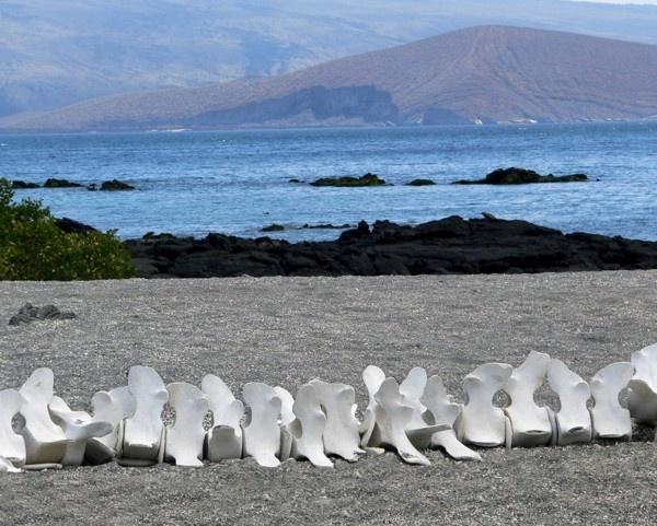 Whale bones view by KangaGal