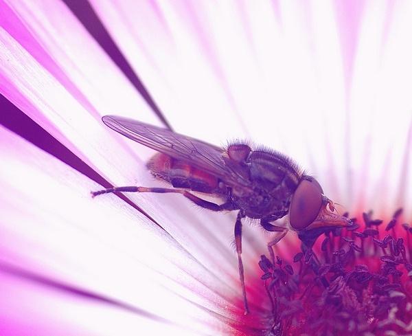 ugly fly by XXXKEITHXXX
