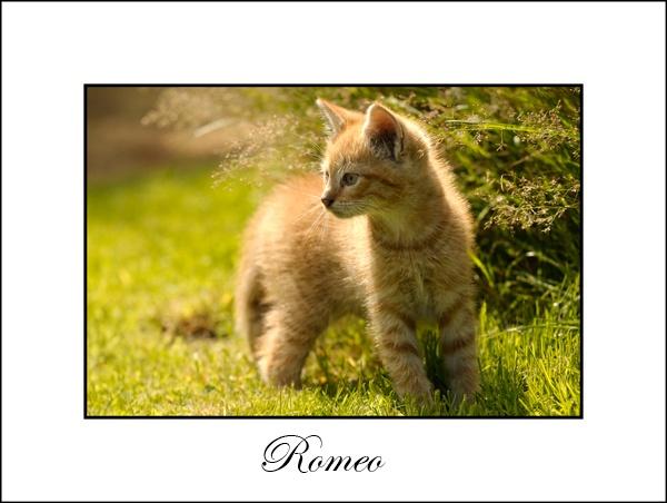Romeo part II by MNPHOTO