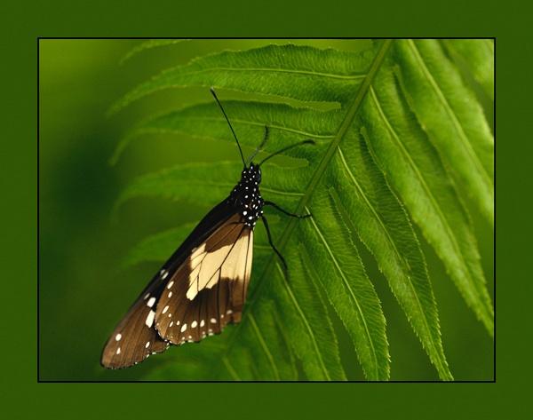 Butterfly by MNPHOTO
