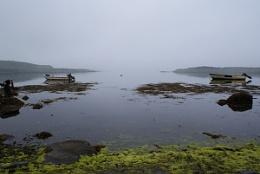 Mist in the Bay