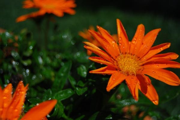 Orangeboom by SugarDJ