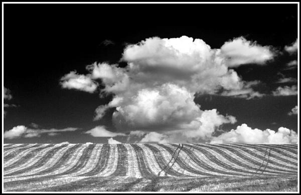 Mono field by jimbo_t