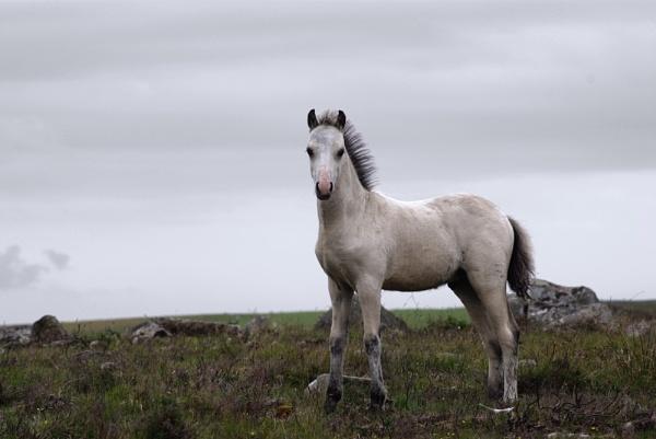 Wild Horses by Djemde