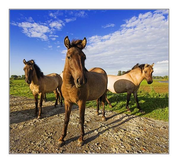 Charlie\'s Horses by conrad