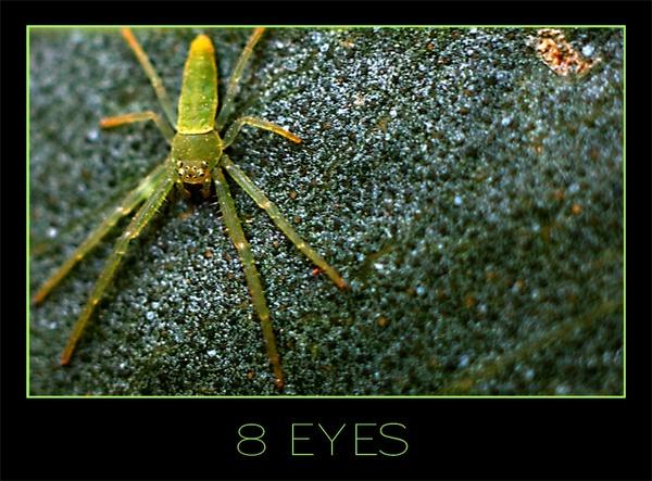 8 Eyes by dazza