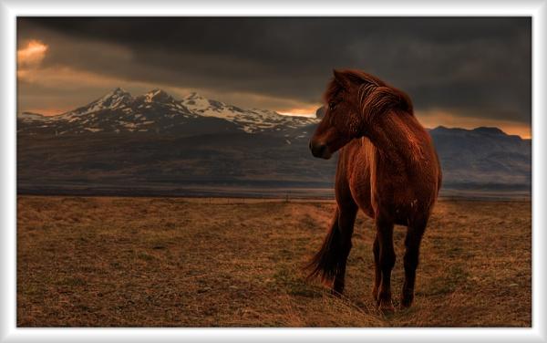 Icelandic Horse by Hugeknot