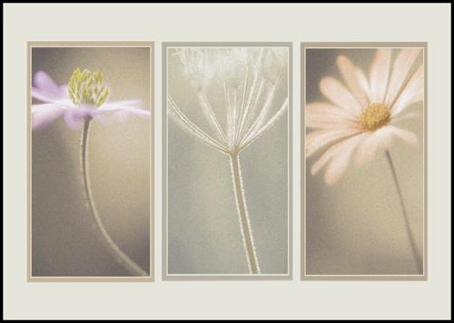 Triptych by PeeCee
