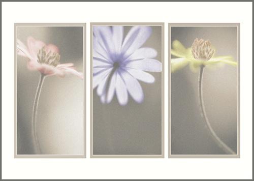triptych 2 by PeeCee