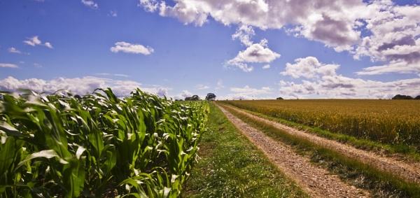 Wheat Field II by PaulaLey