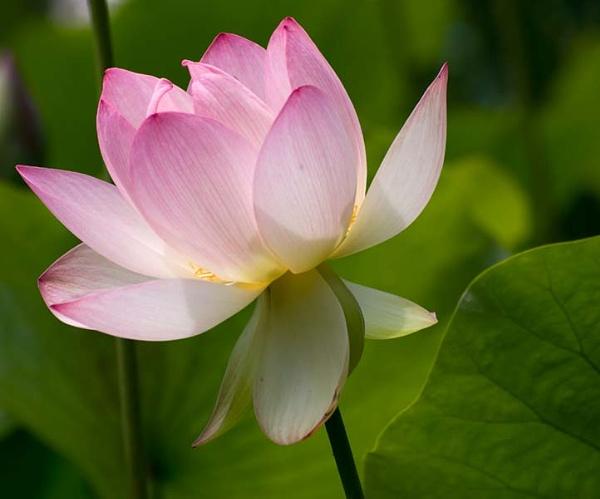 Pink Beauty by BillTheBaer