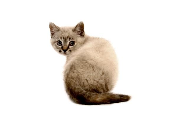 The purrrrrfect Kitten by capture