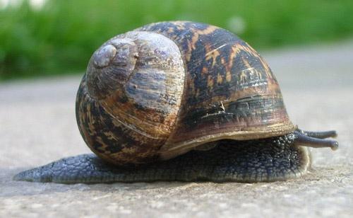 Snail by AlexisM