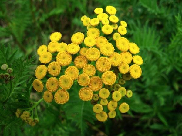 Yellow stamens by ChrisPhotos145