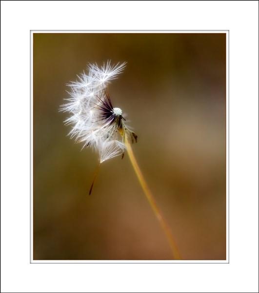 Make A Wish by LisaRose
