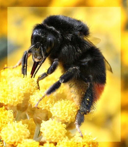 BEE by scoff