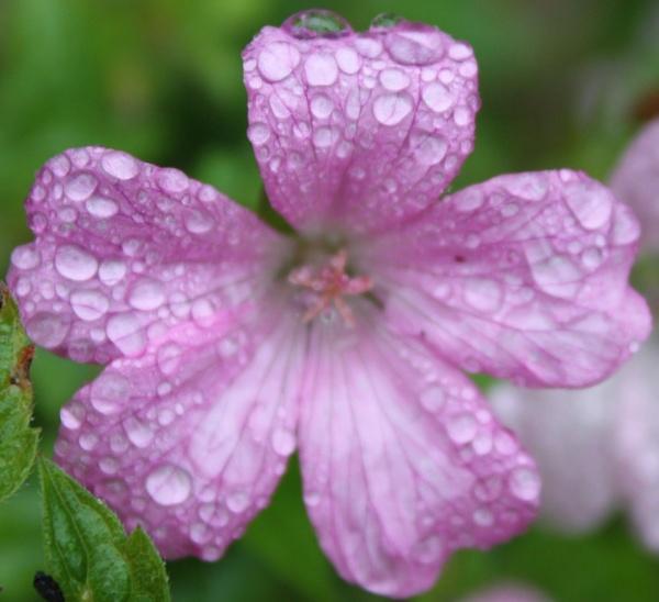 pretty raindrops by mellowsoup