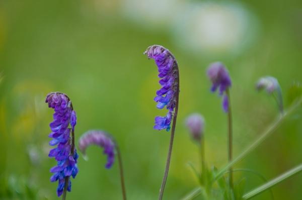 Dreamy flowers by Serkta