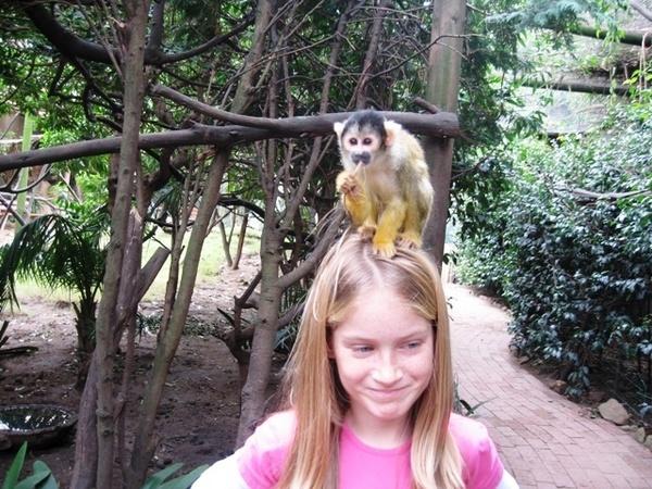 Monkey Business by Swati