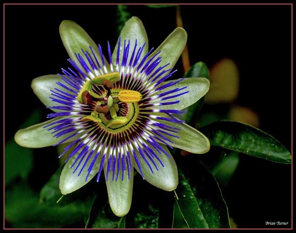 flower by ducatifogarty