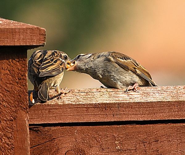 Feeding Baby by Jimmy31