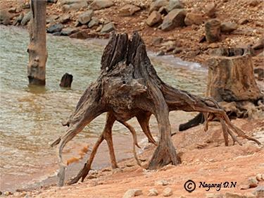 Alien on earth/beauty of nature by nasoteya