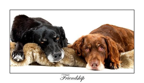 Friendship by MNPHOTO