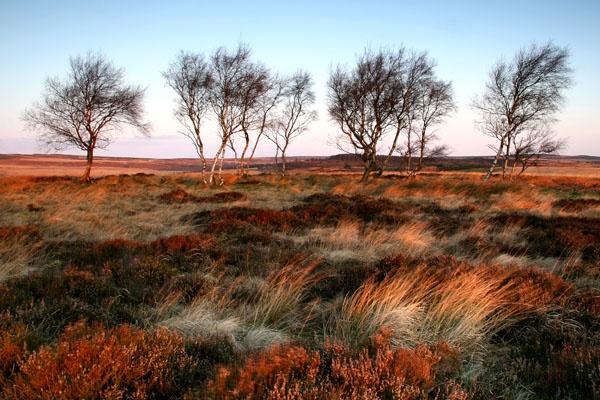 Moorland Sunrise by coxy