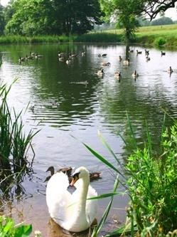 Cofton Lake Birds by videotec