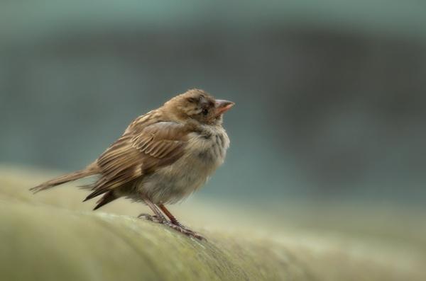 fledgling by funkymarmalade