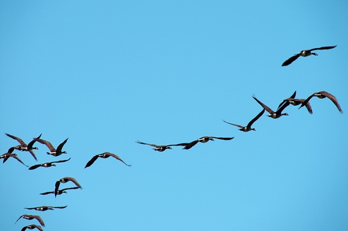 Geese Formation by kevster