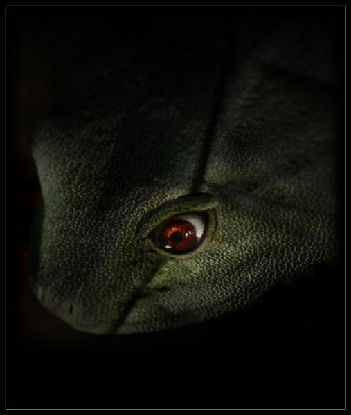 Night Hunter by Morpyre