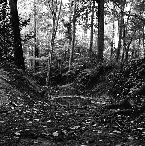 Woodland 2 by Skatershrew