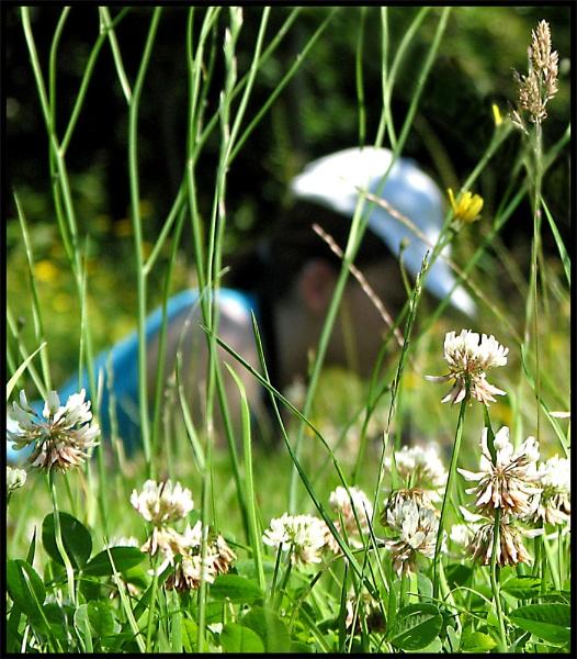 Bug Safari by KarenFB