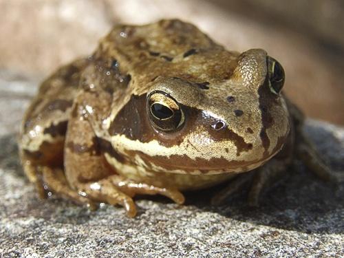 Frog by NatalieCHurrell