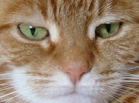 Cat\'s eye\'s by MandyS