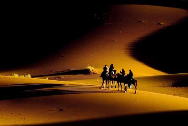 Camel Train by Thanatos