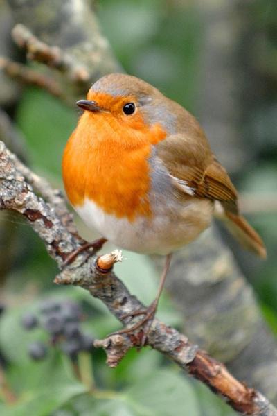 Round Robin by paulraymondphotography