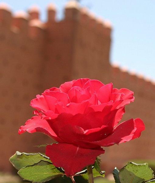 medina rose by mellowsoup