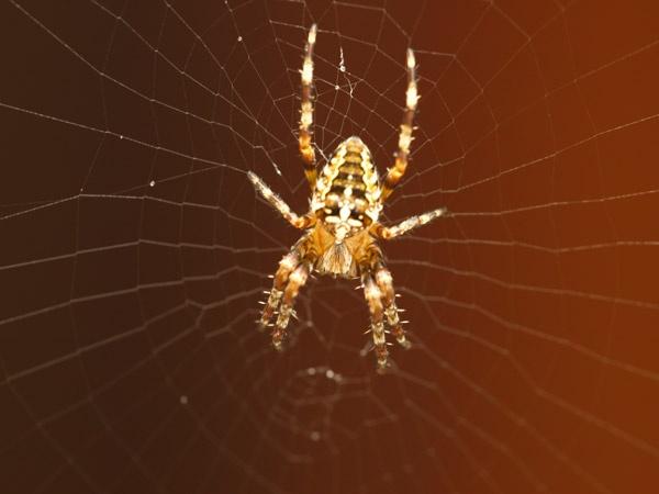 spider by Tournisol