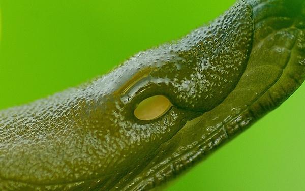 aligator slug ? by XXXKEITHXXX