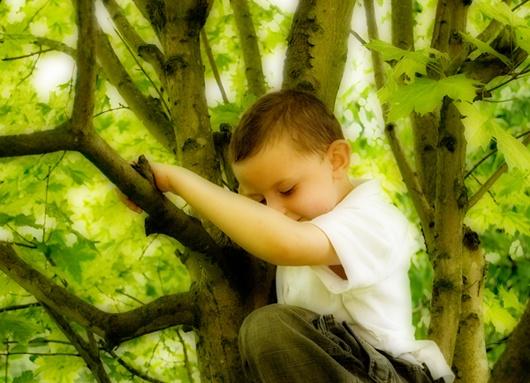 Treeboy - Orton Style by Clandestine