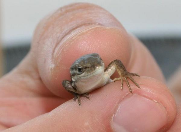 Lizard by fjchrystello