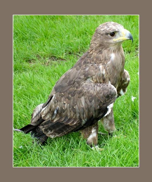 Big Bird by nordical
